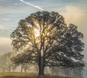 Ağaç.png